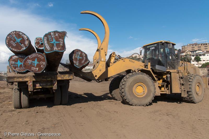 Industrial Logging Activity