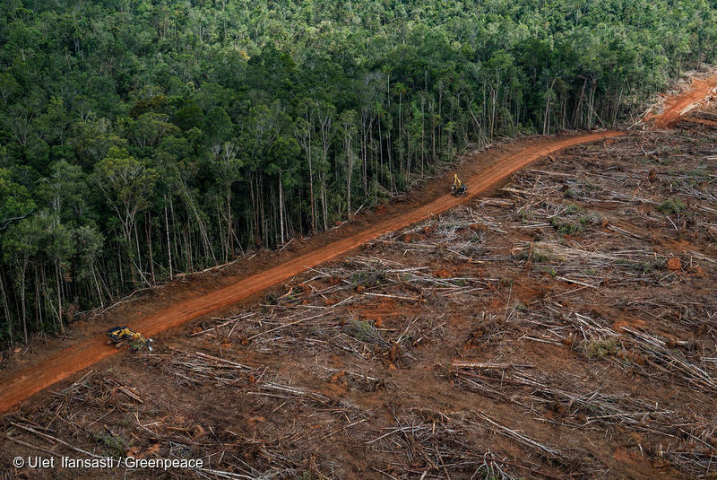 Aerial shot of forest clearing