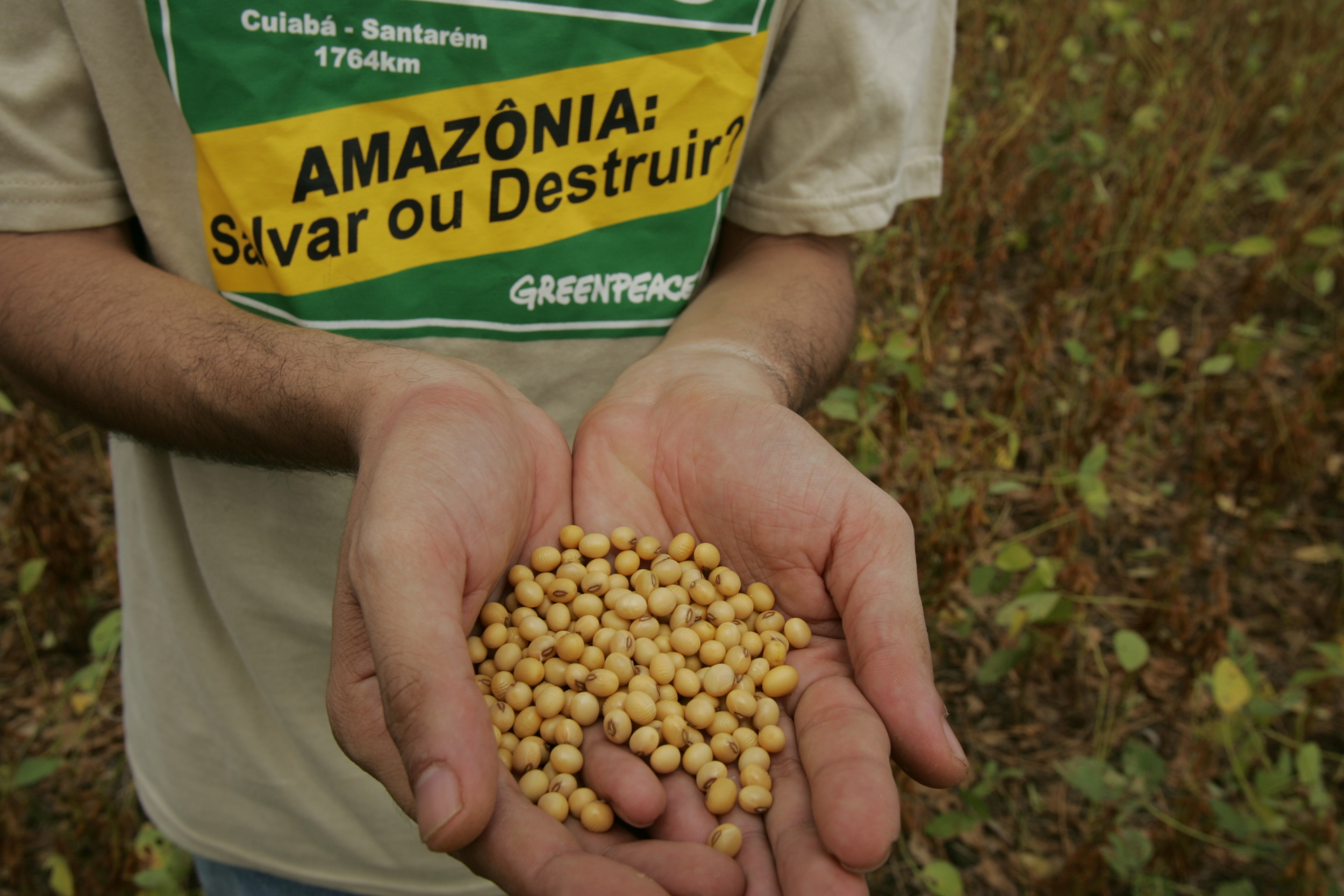 soya beans in a hand