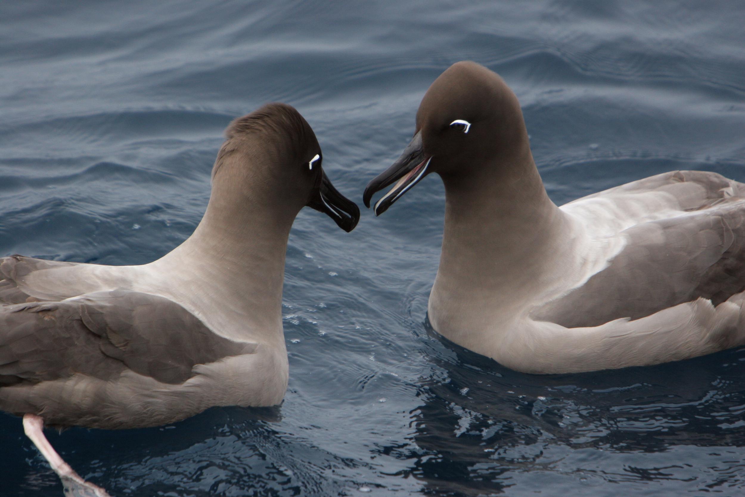 2 birds in water