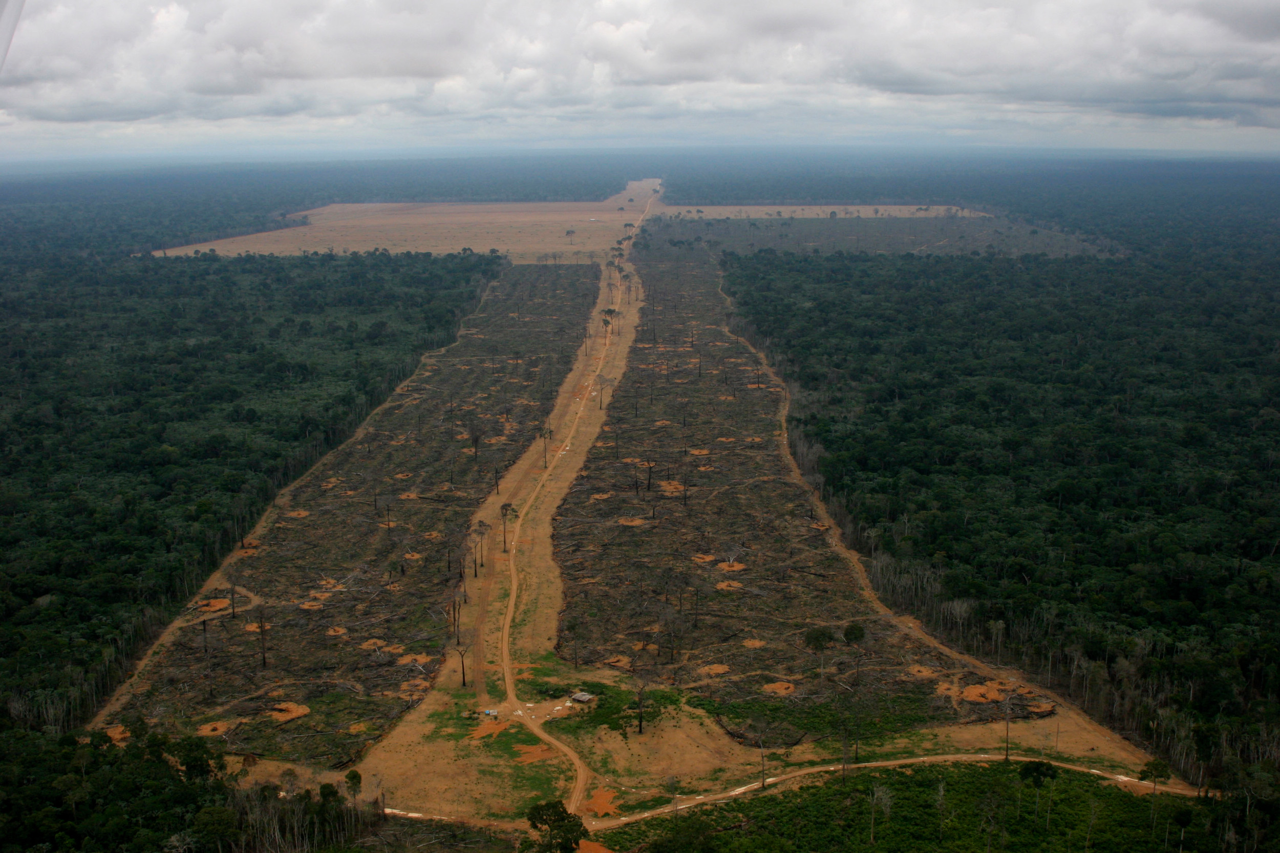 aerial shot of deforested area
