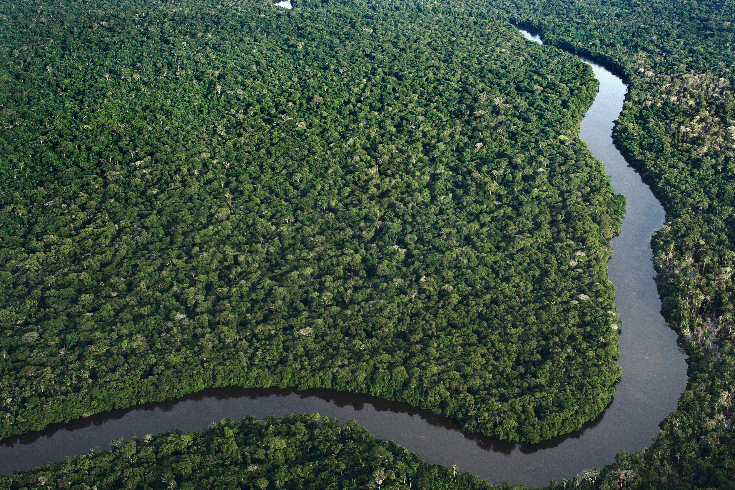 aerial view of Amazon forest
