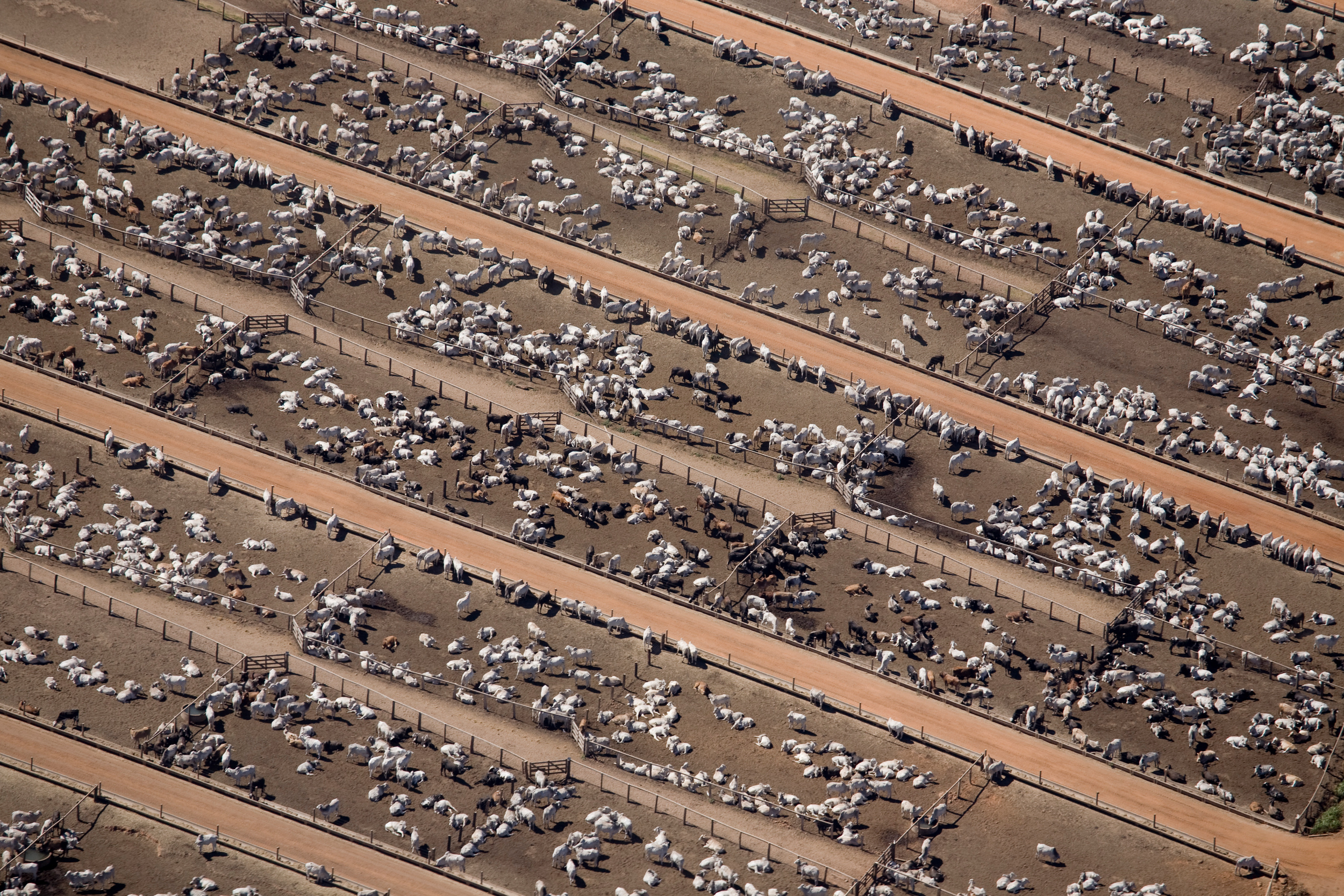 aerial view of cattle farm