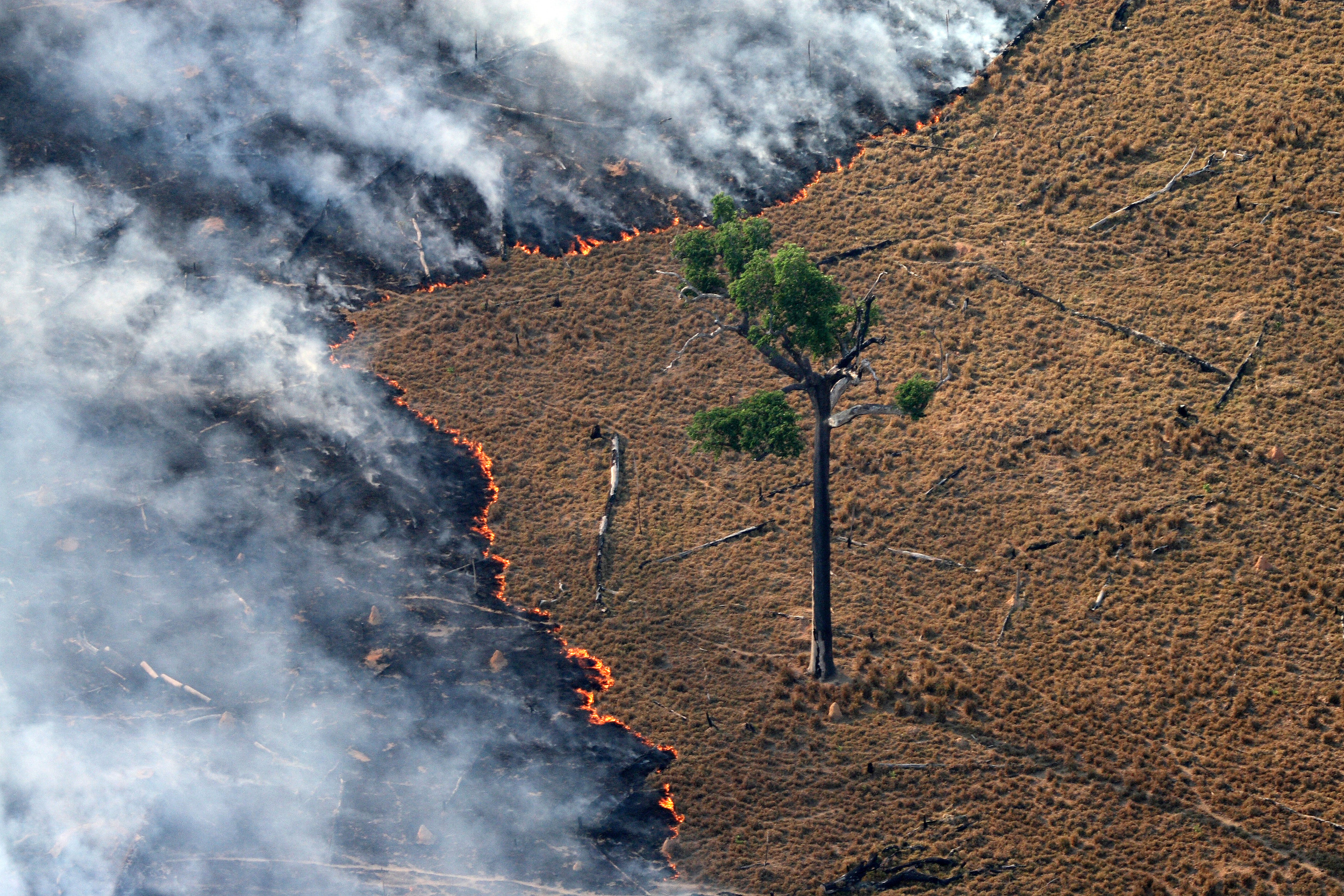 burning pasture in Amazon