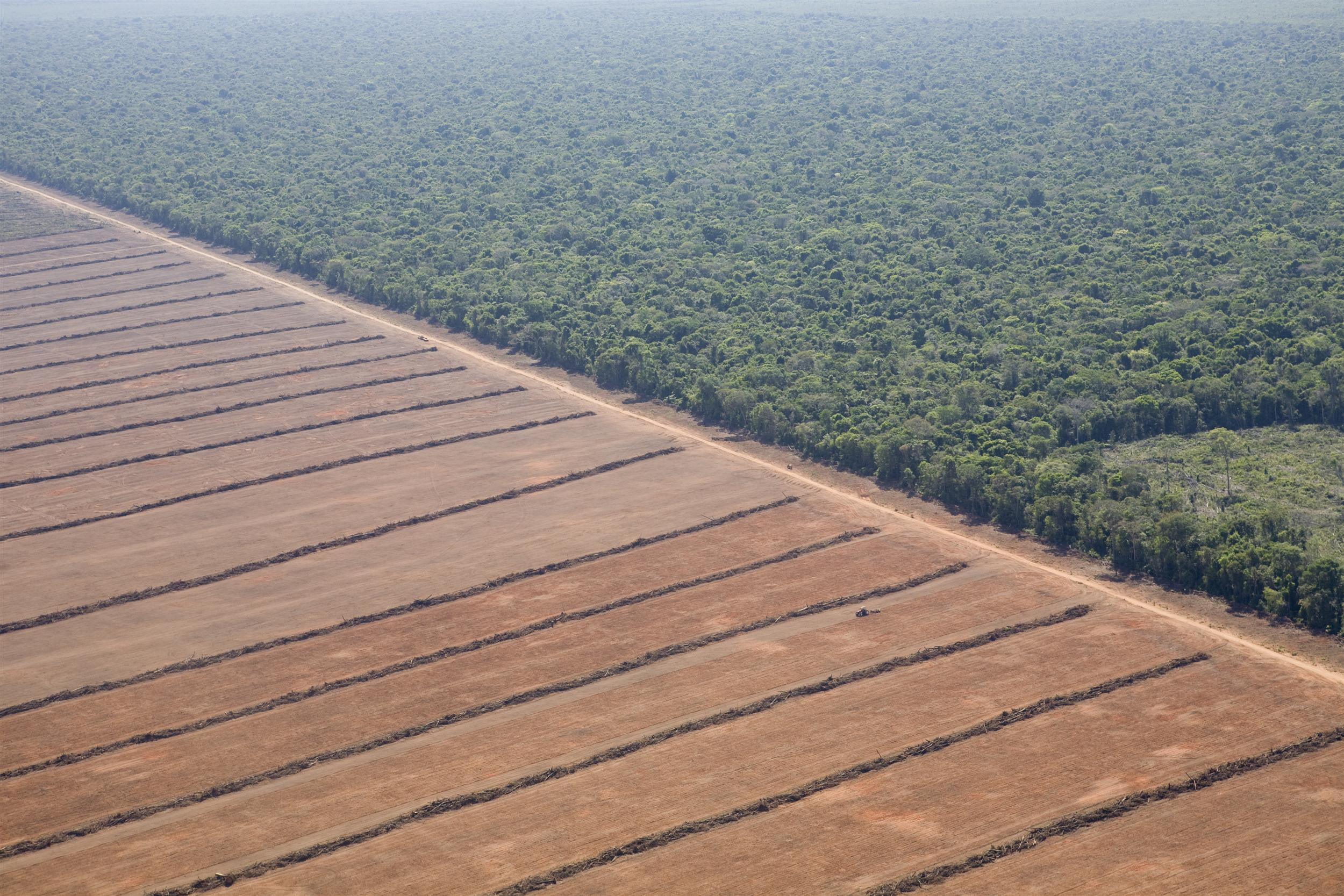 aerial view of farm in Amazon