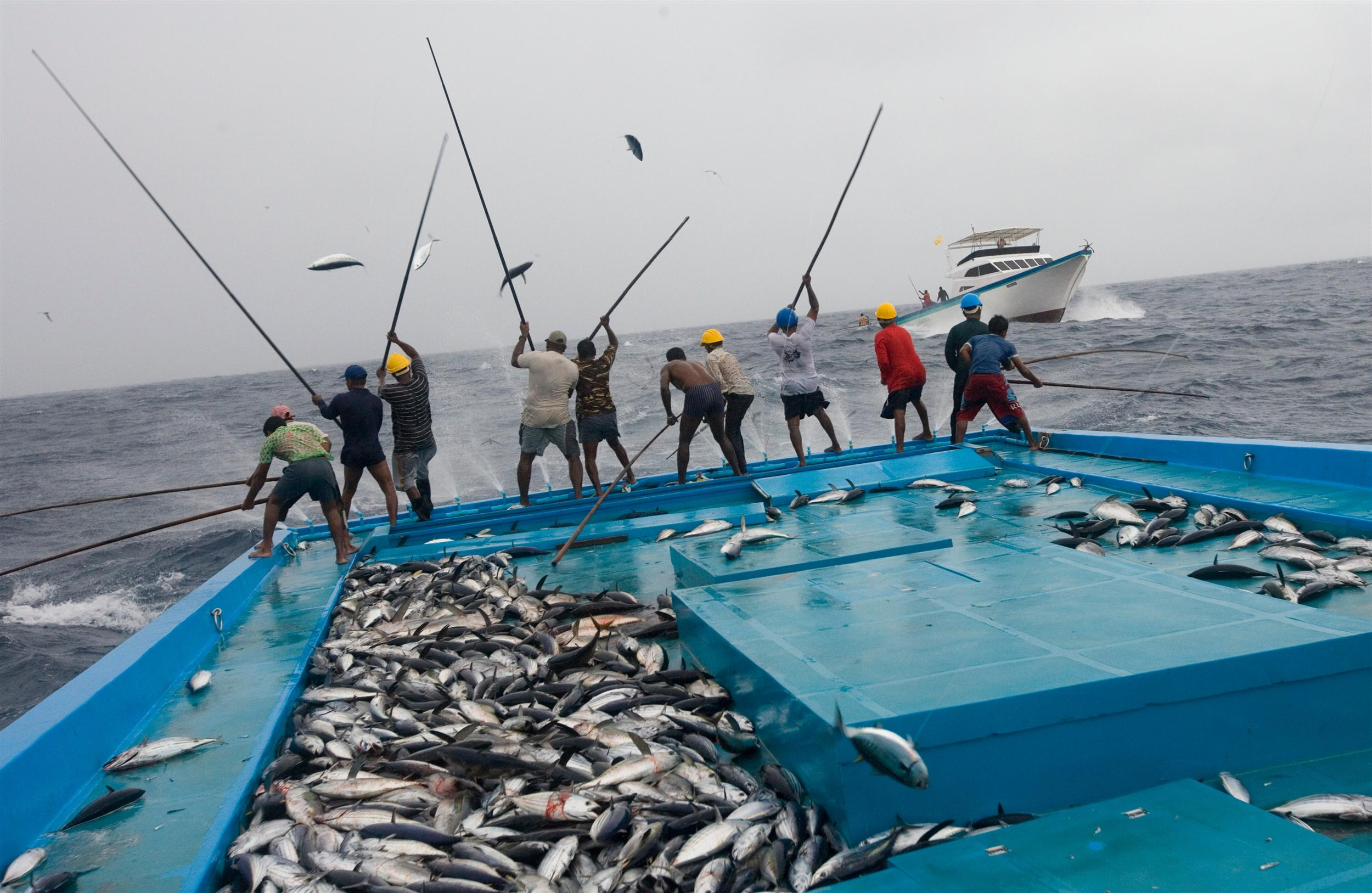 fishermen on traditional boat with lots of tuna