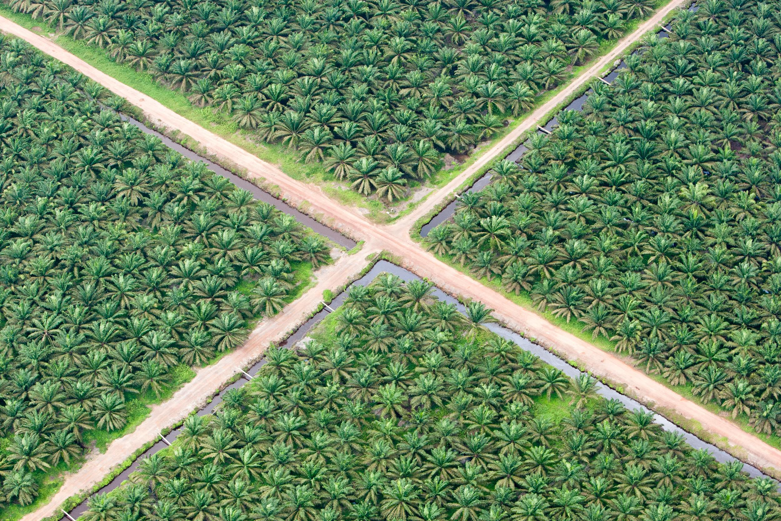 aerial shot of plantation