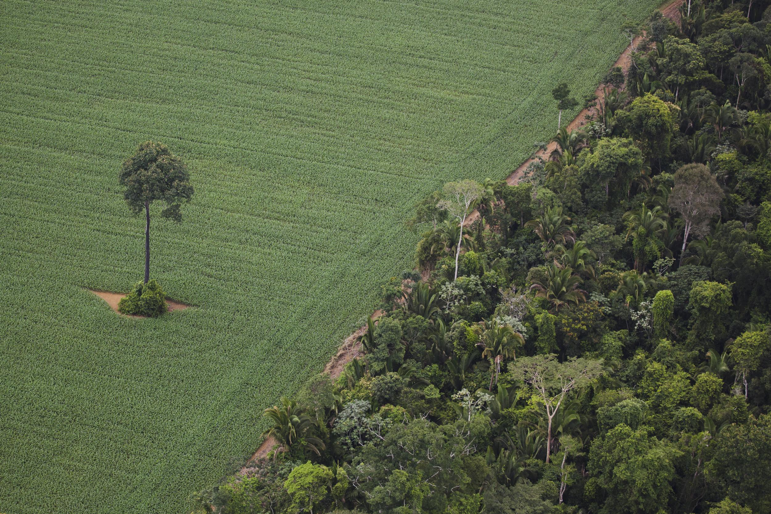 deforested area of forest