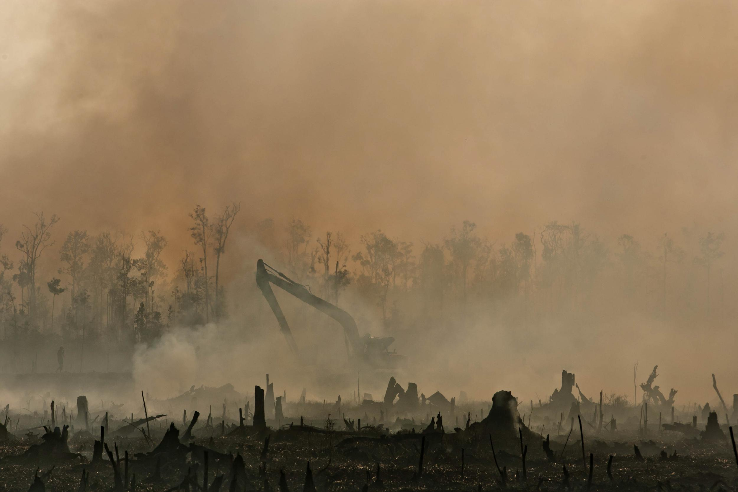 smoke over a burnt forest
