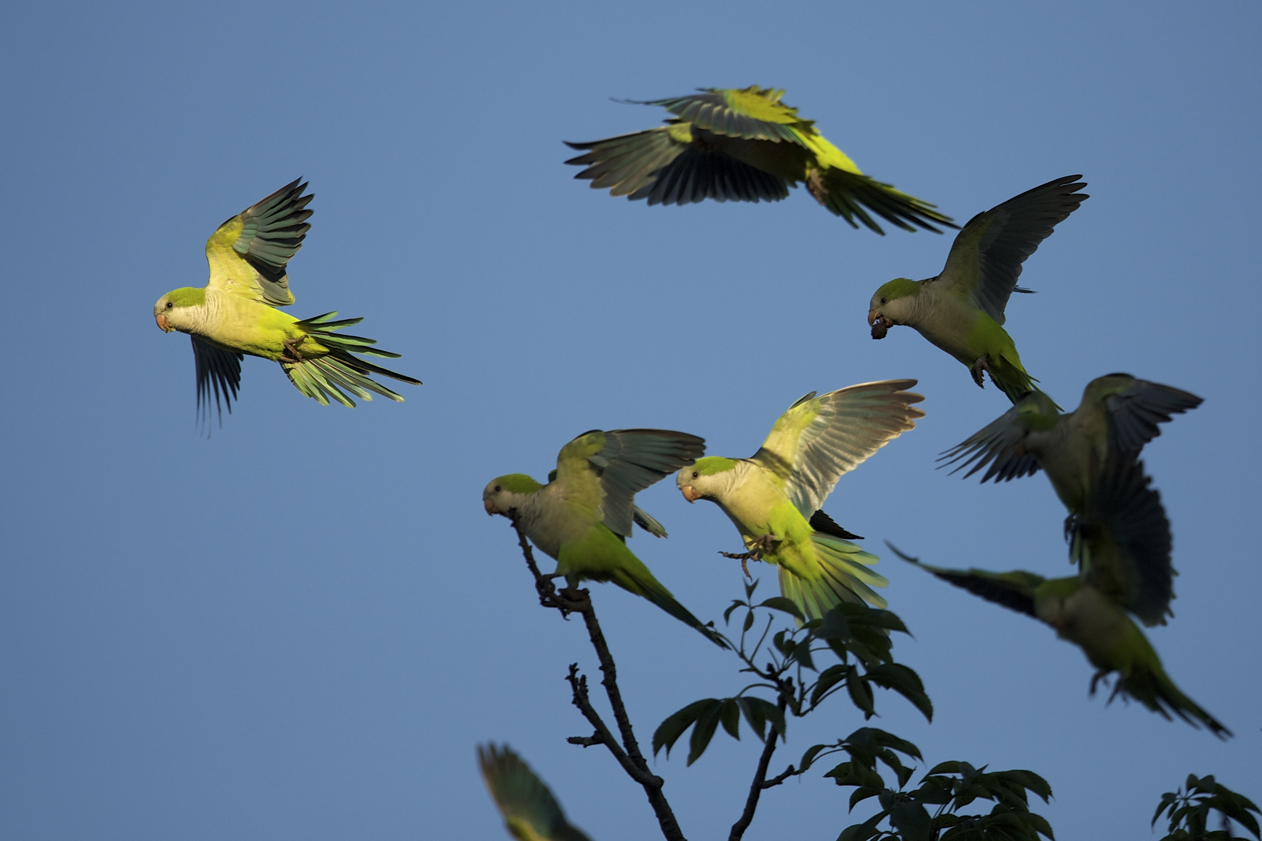 parrots on a tree