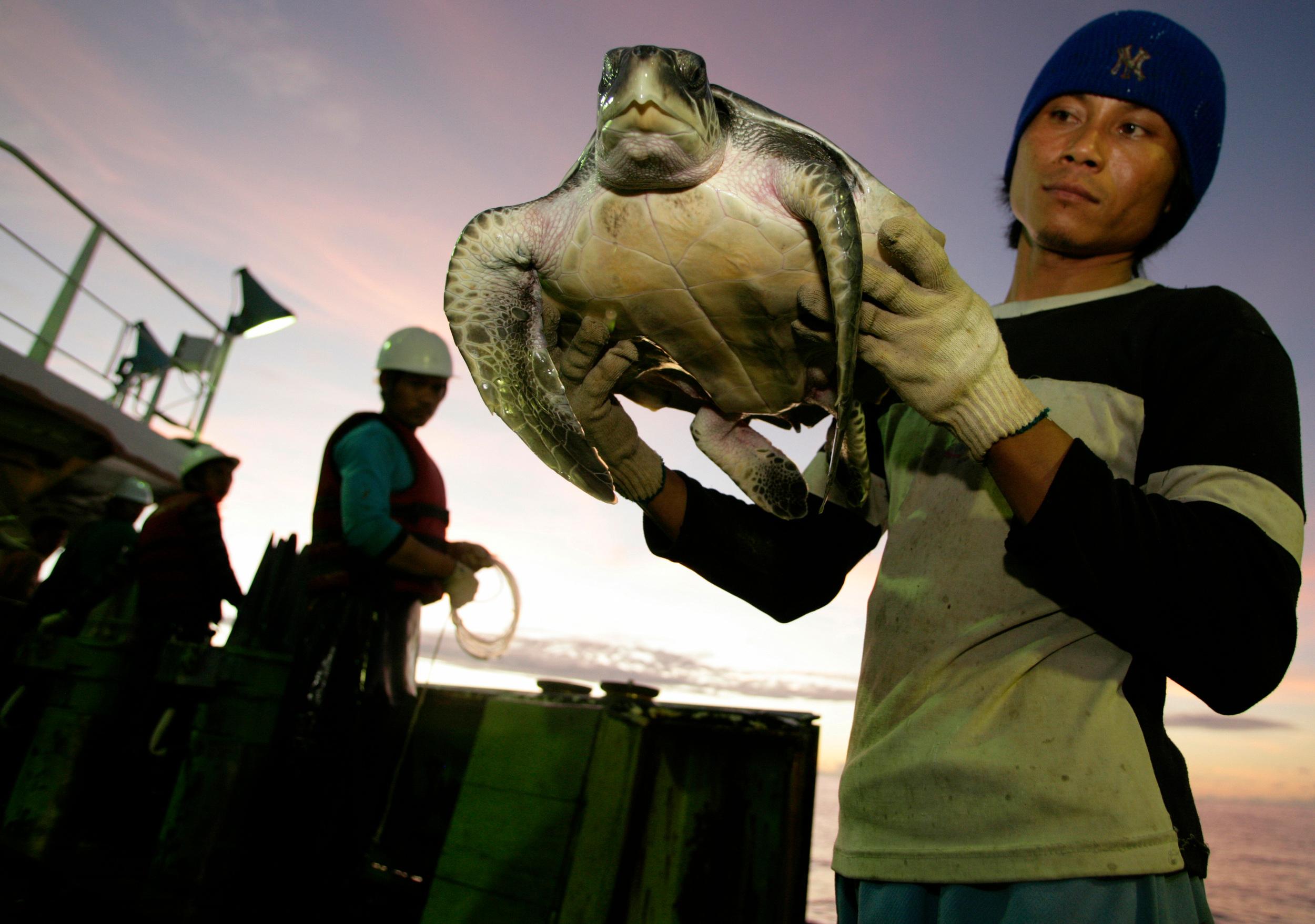 persona sosteniendo tortuga para examinarla