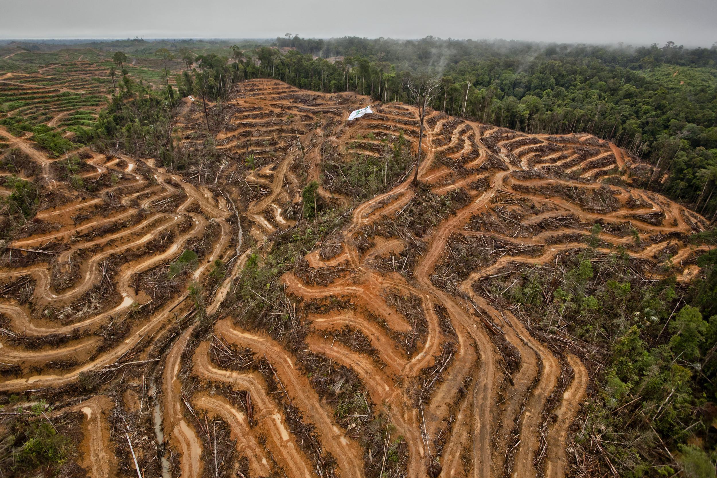 farmed peatland