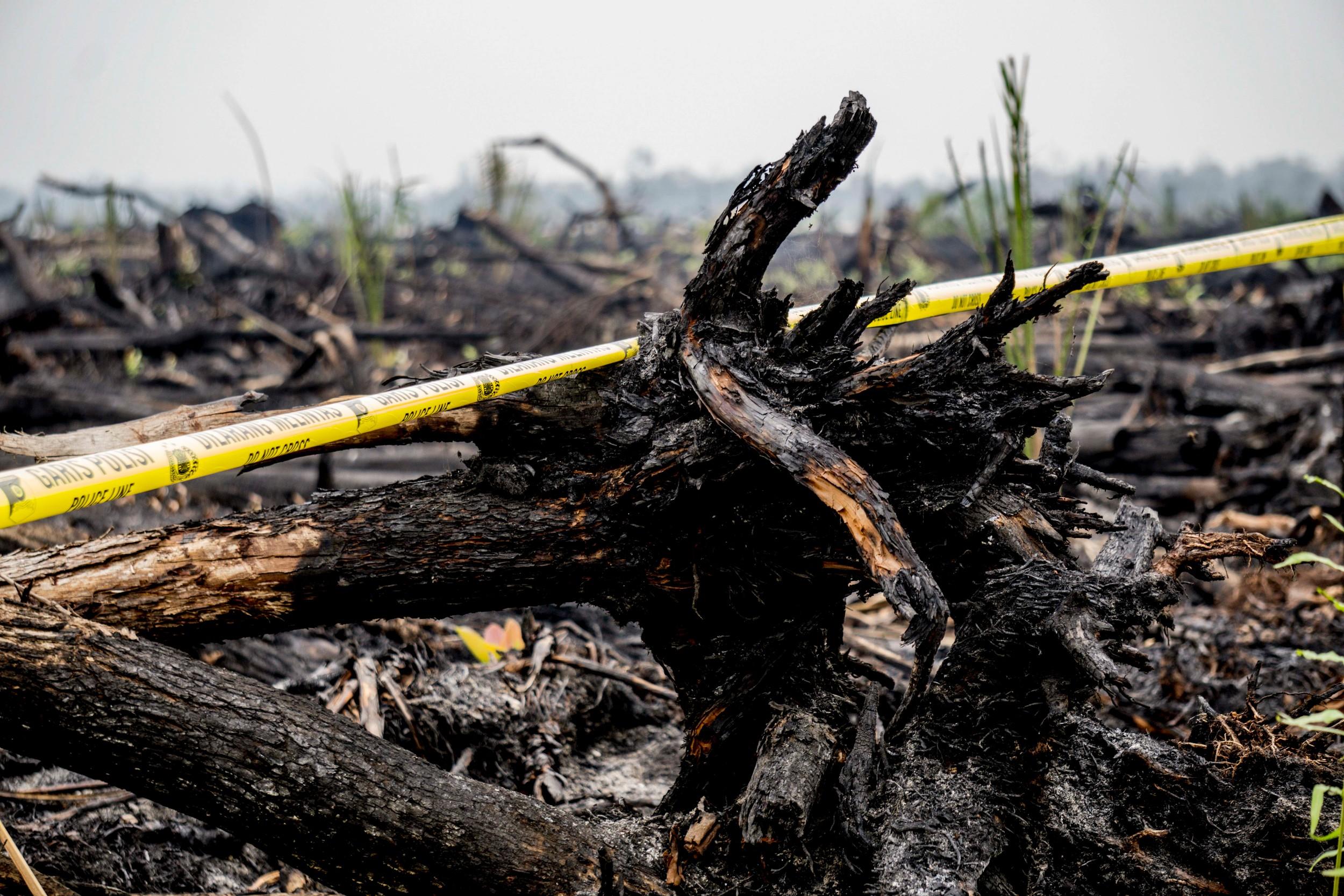 burnt trees