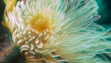 Spiral Tube Worm