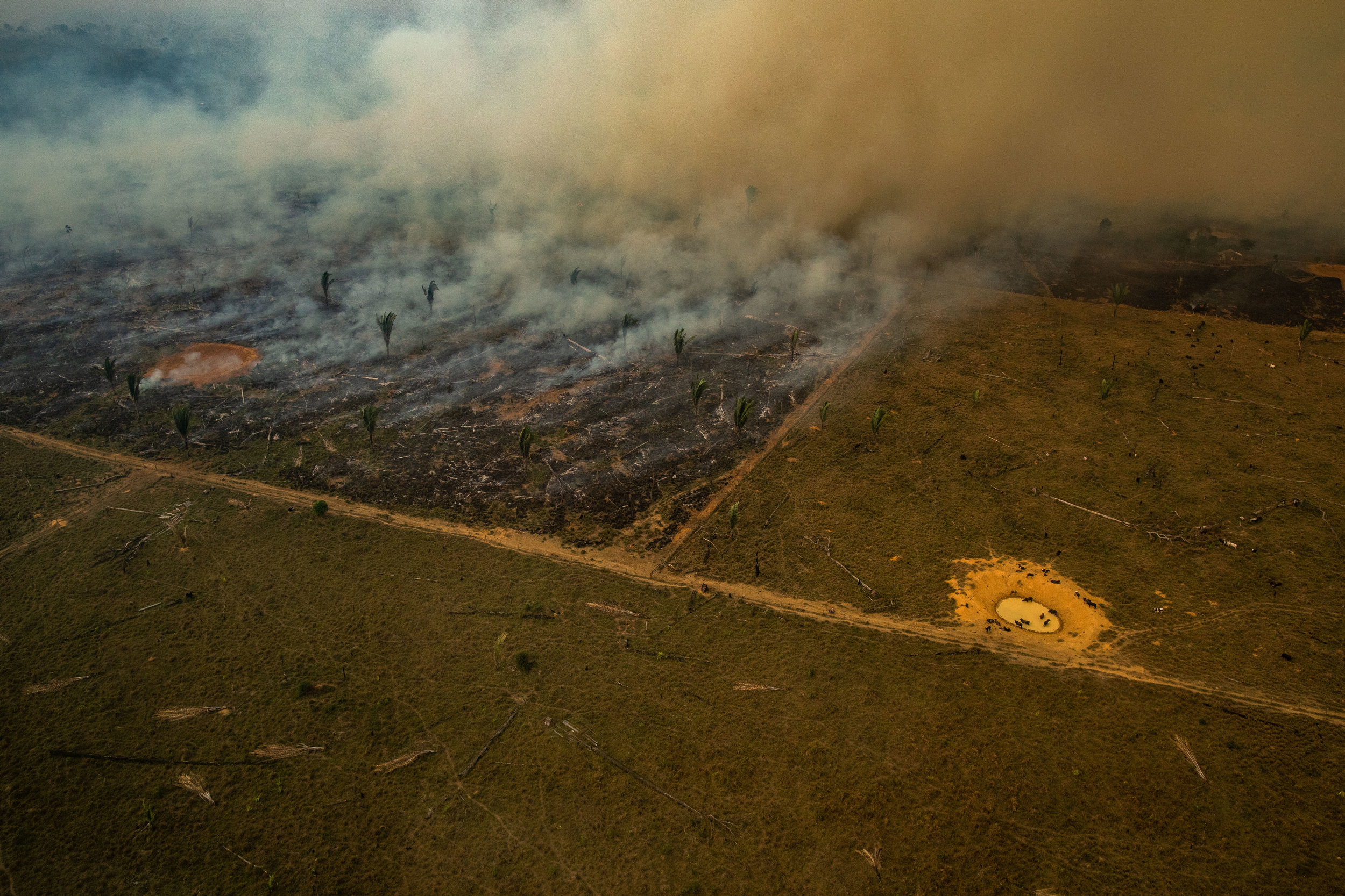 Burning Amazon rainforest surrounded by farmland with grazing animals