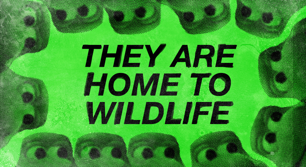 Stylised cartoon turtles surround text that reads 'They are home to wildlife'