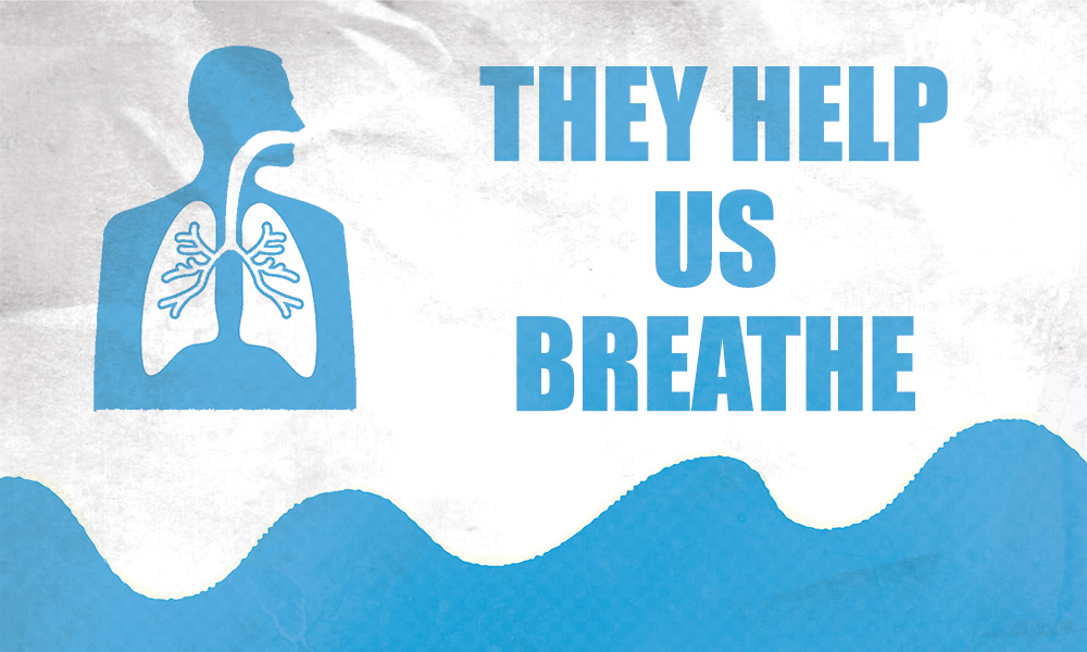 Diagram of human breathing system over ocean waves. Text reads 'They help us breathe'