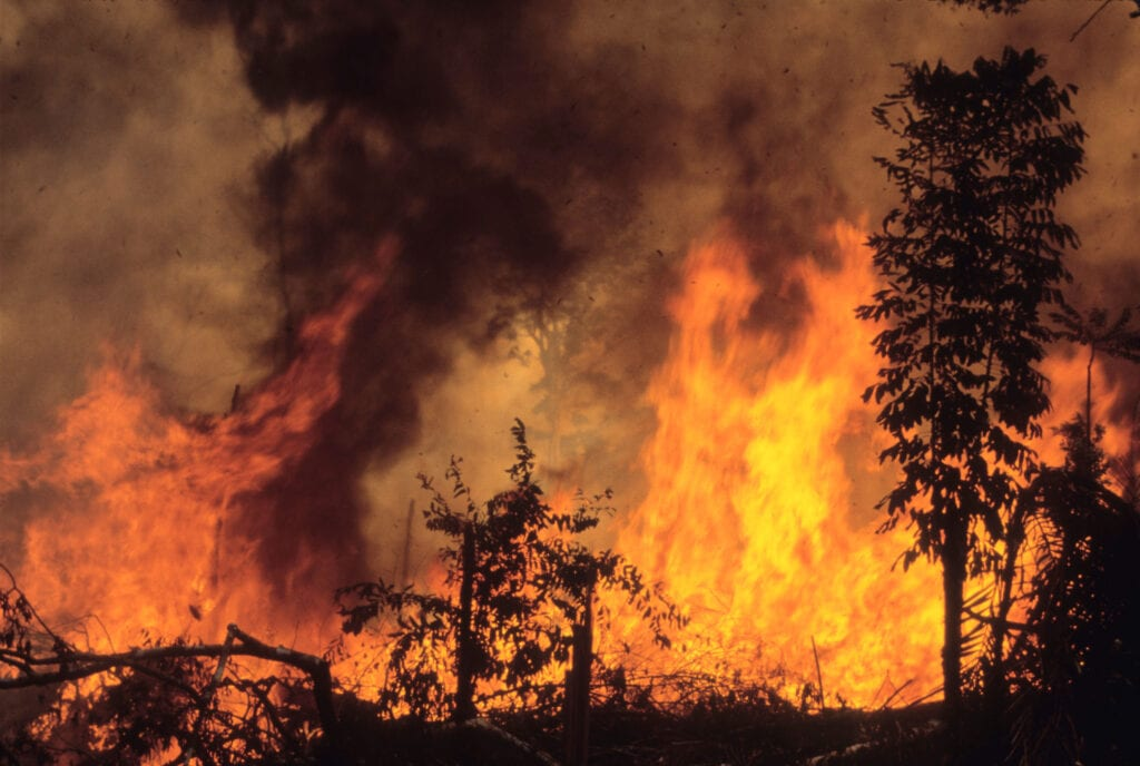 Trees are silhouetted against a sheet of flames as a forest fire rages in the Amazon
