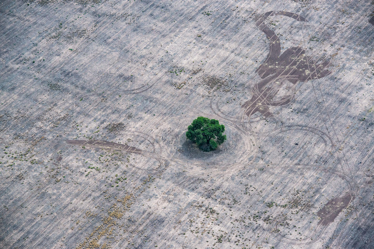 In this aerial photo, a single green tree sits in a huge area of bare grey earth, marked with tire tracks