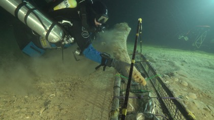 A diver underwater with special equipment placing a tusk into a basket on the sea floor