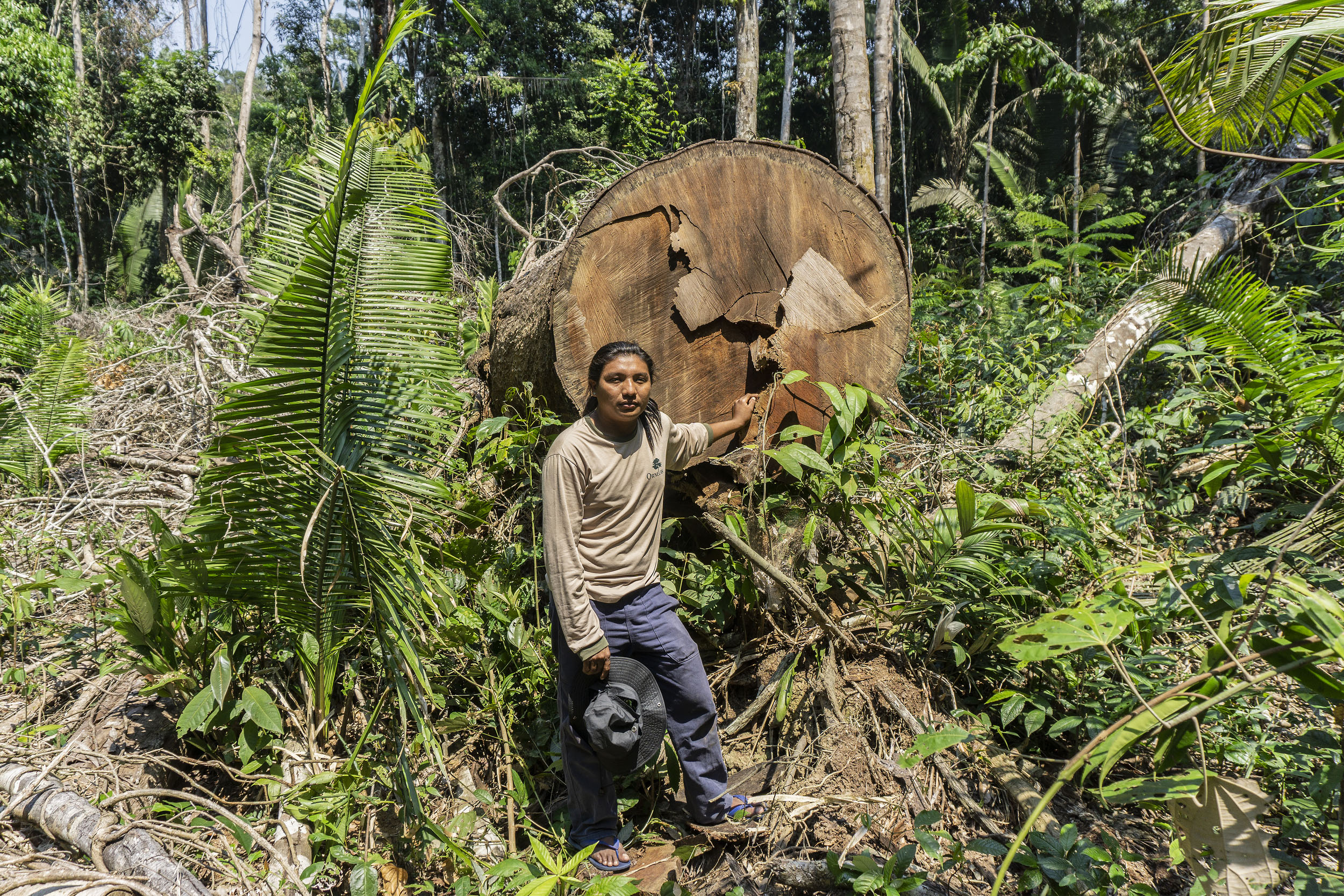 A man stands at the stump of a felled tree with a diamater of around a metre, surrounded by rainforest.