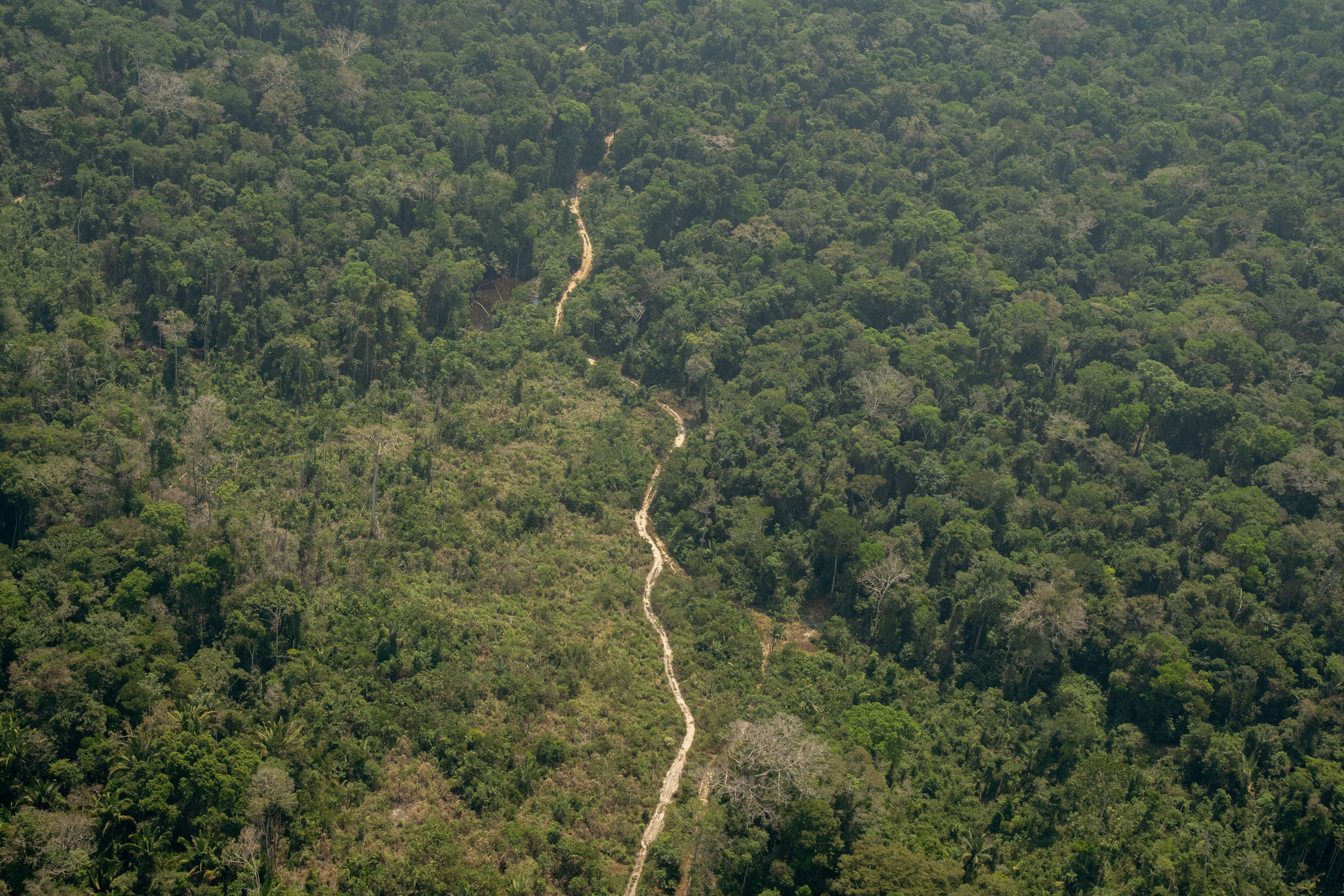 An aerial view of a road cut through the rainforest surrounded by lower-density trees where deforestation has taken place.