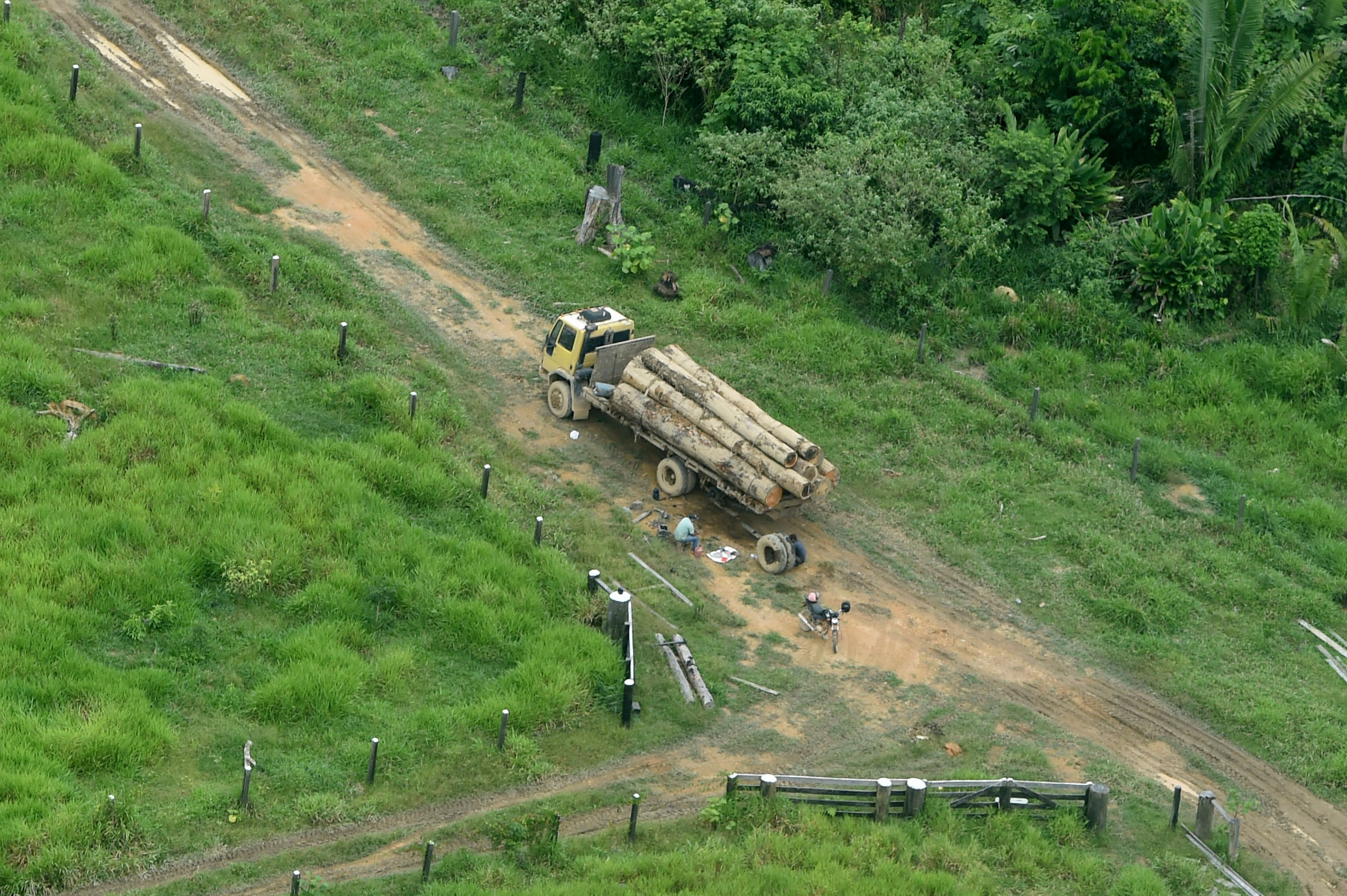 A truck removing logs via a dirt road surrounded by grass and a small patch of visible rainforest.