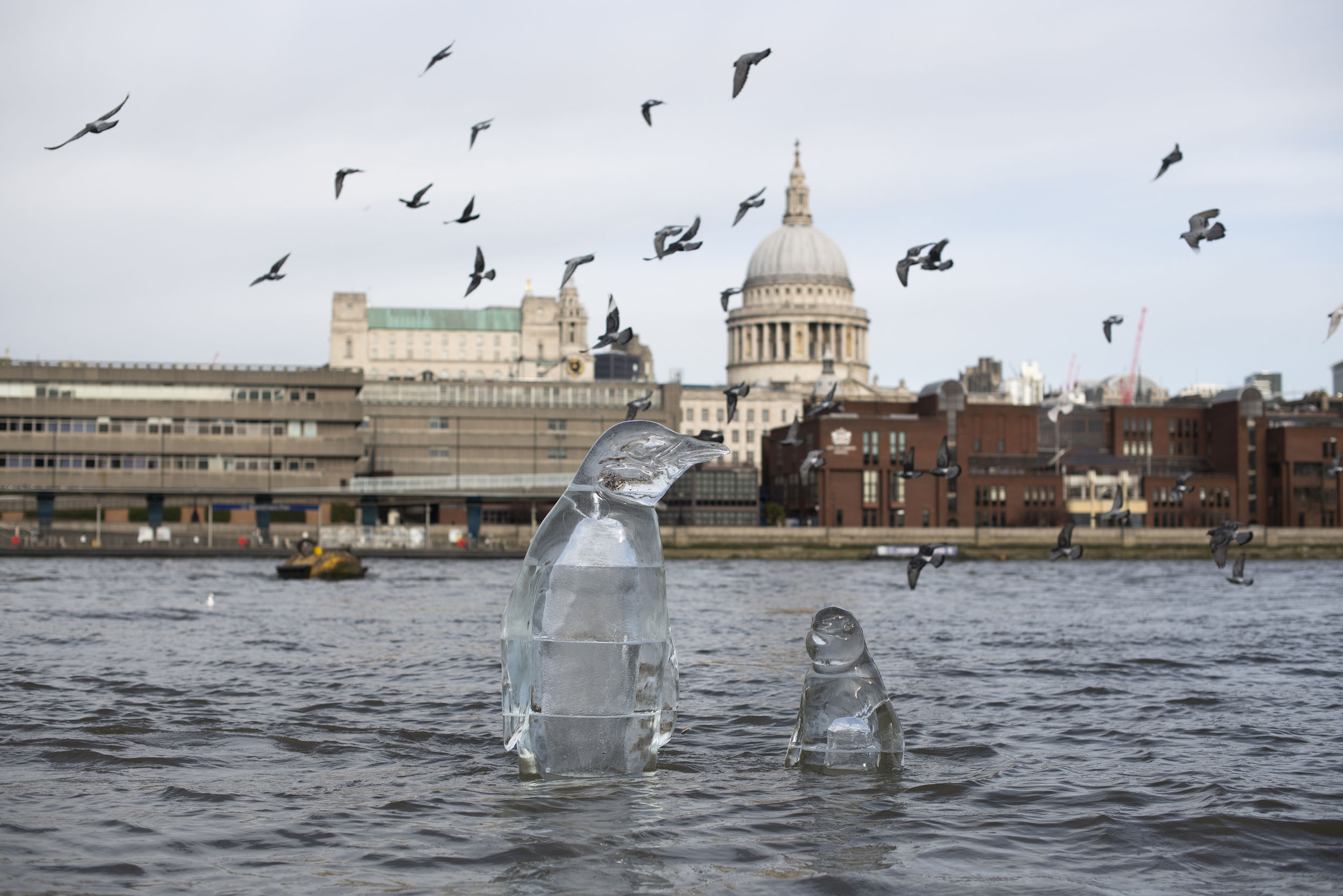 Two penguin ice sculptures are half submerged by the rising tide in the River Thames in London. The iconic dome of St Paul's cathedral is visible in the background