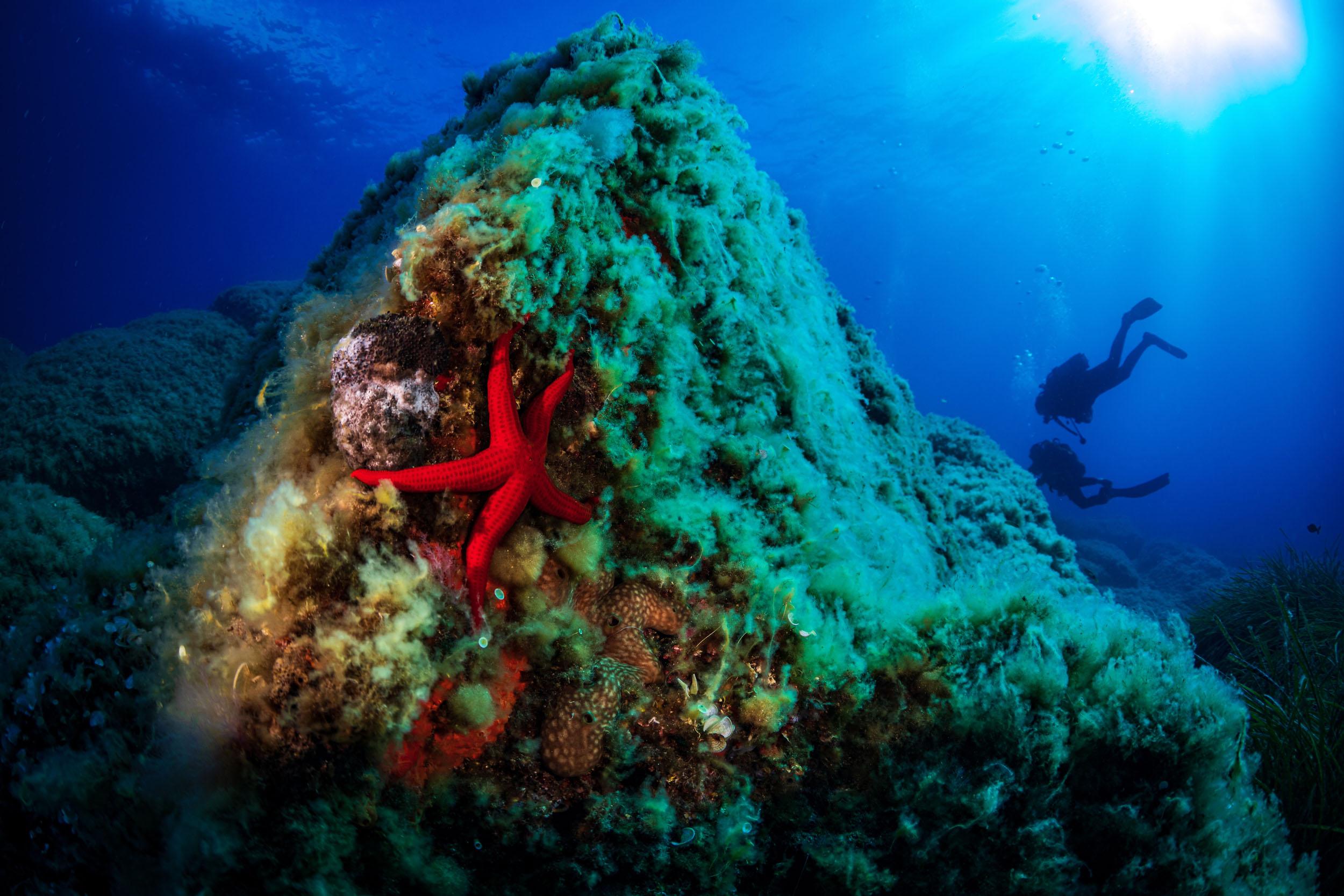 A red starfish clings to the side of a mound on the seabed. A diver is visible in the background.