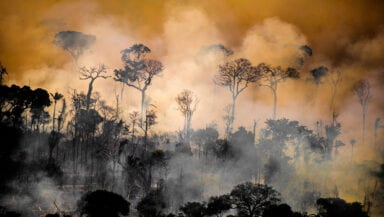 Rainforest trees are silhouetted against an orange backdrop of smoke from an ongoing forest fire.