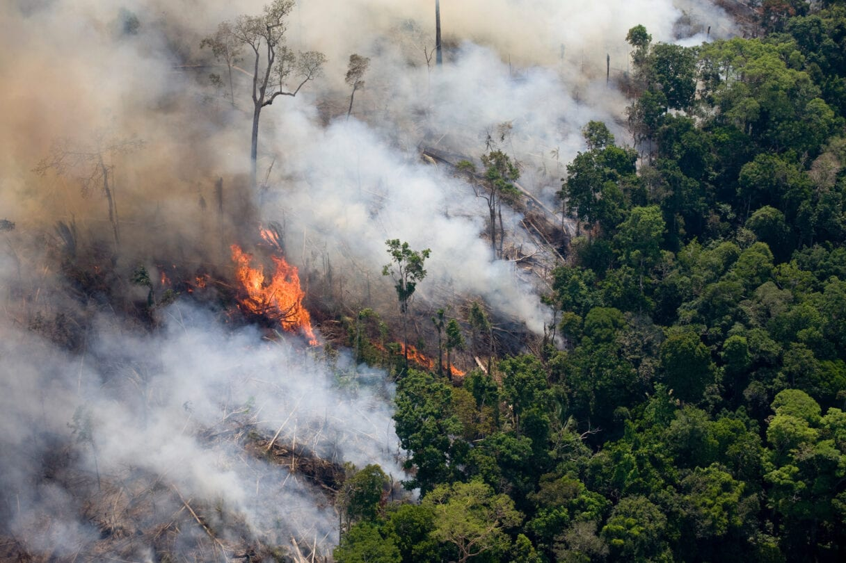 Aerial shot of forest fire