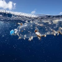 Small shellfish have anchored themselves to a plastic bottle drifting just below the surface of the ocean