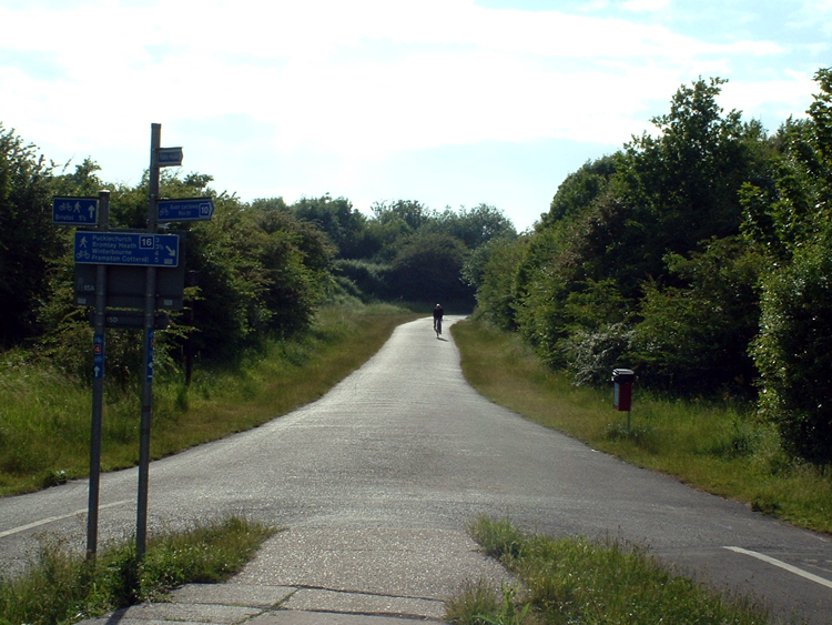 A fork in a flat cycle path with lane markings, surrounded by lush green trees, hedges and grass, with multiples blue cycleway signs on a signpost. There's a single cyclist at the end of a path in the background.