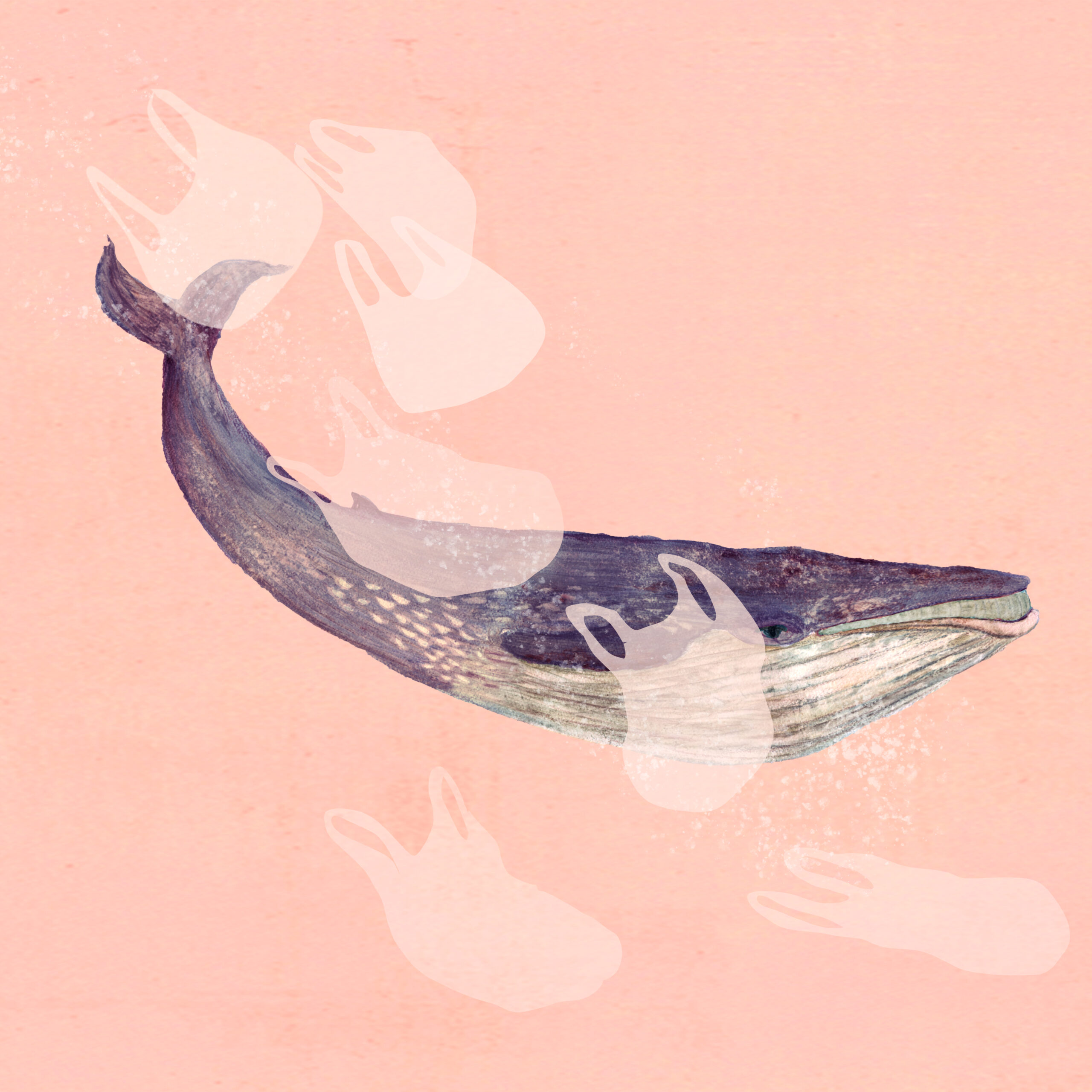 A dark blue whale on a pink background with seven translucent plastic carrier bags in the foreground.
