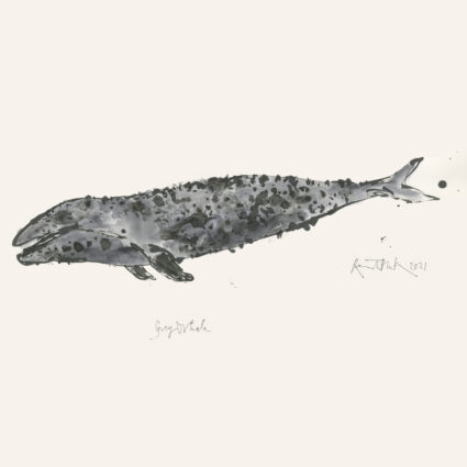 A light grey whale painted in watercolour with dark grey spots that give it a mottled texture, with spidery handwriting underneath reading 'Grey Whale' and a the signature of Quentin Blake with the year 2021