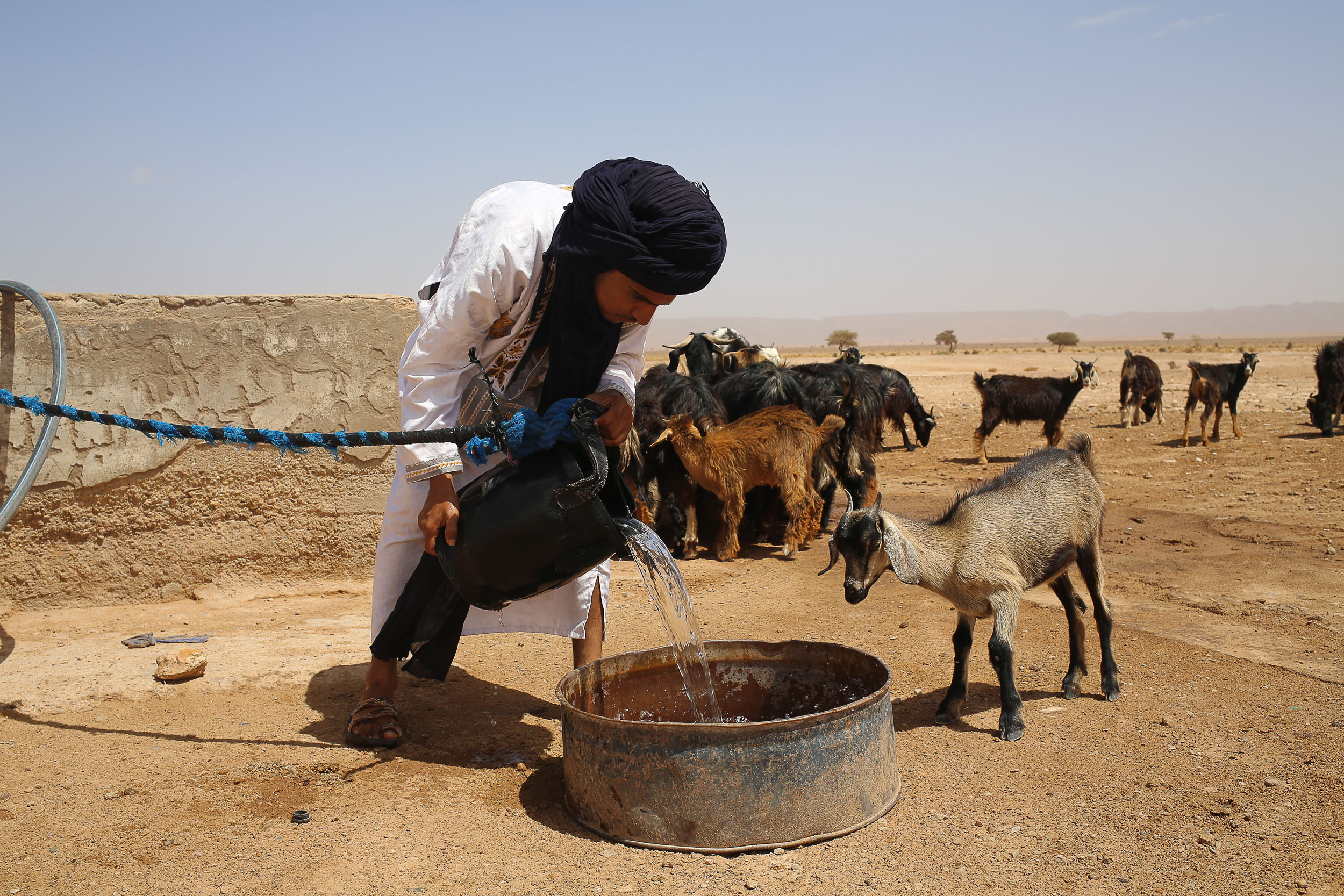 A man in traditional Moroccan desert-dweller dress with a while long shirt and black turban pours water into a round metal trough, with a goat standering over waiting to drink. There are goats and a dry, sandy desert scene in the background.