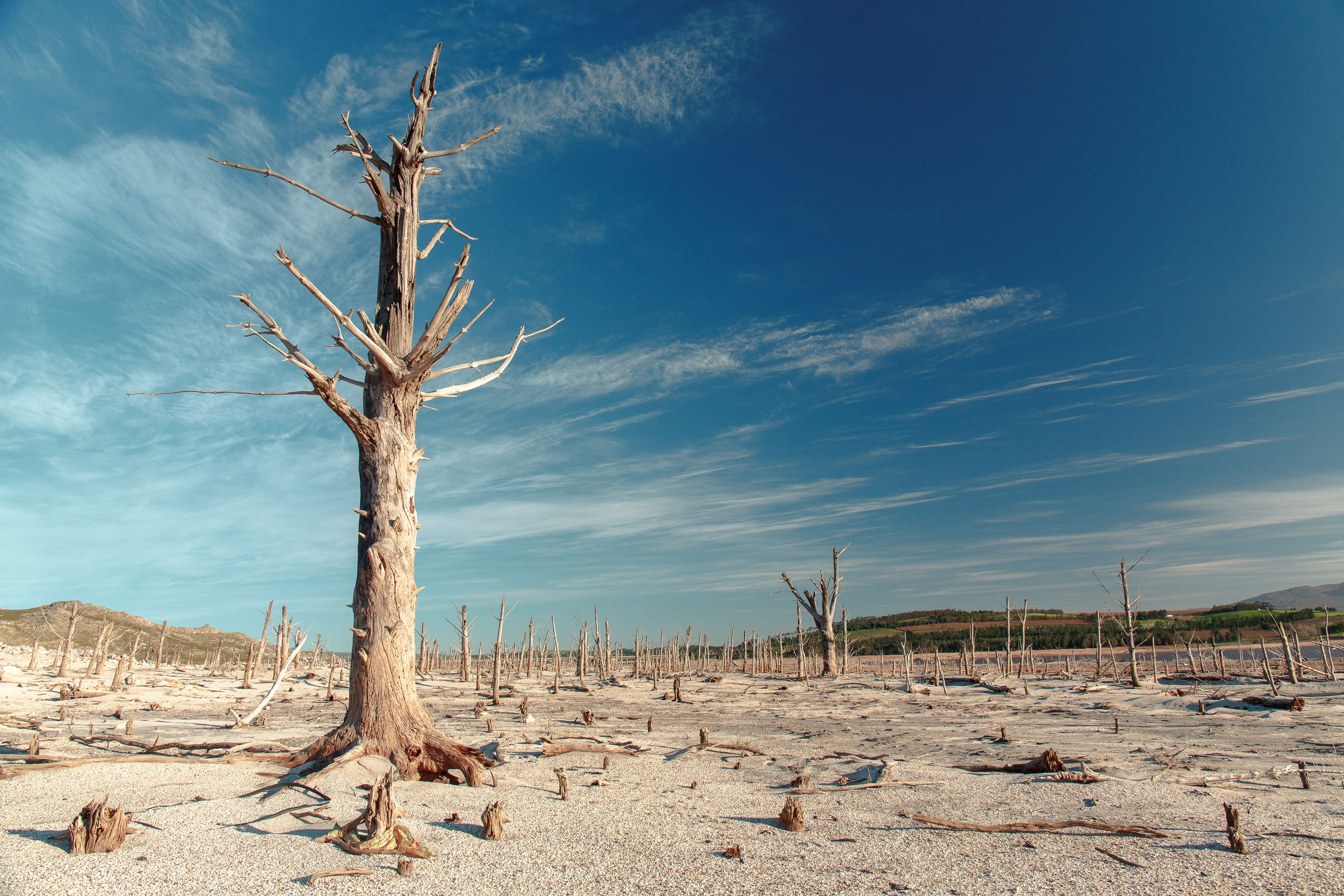 A bleak landscape of dried out, dead trees sticking out of what looks like a reservoir bed. The sky is blue with very few high clouds, and there is a large tree in the foreground.