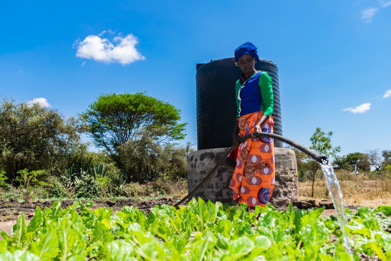 A woman in brightly coloured african print clothes in orange, blue and green, watering a bright green spinach bed. There is a large black water drum behind her and a bright blue sky with one or two small white clouds.