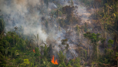 Aerial view of a lush forest on fire, with clouds of smoke rising from the canopy.