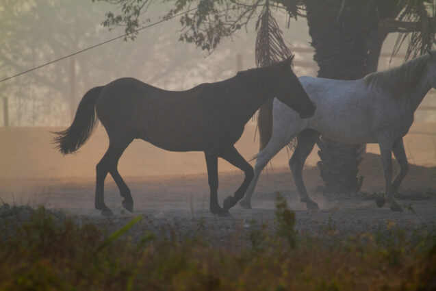Two horses walk through a smoke-hazed landscape
