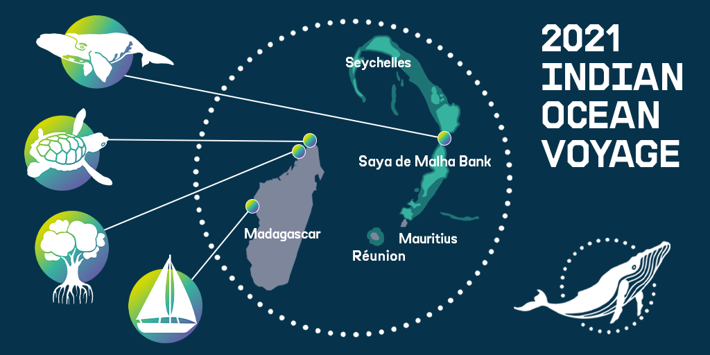 A map showing the area just east of Madagascar where the Greenpeace ship will be going, with illustrations of a whale, a turtle, mangroves and a sailboat