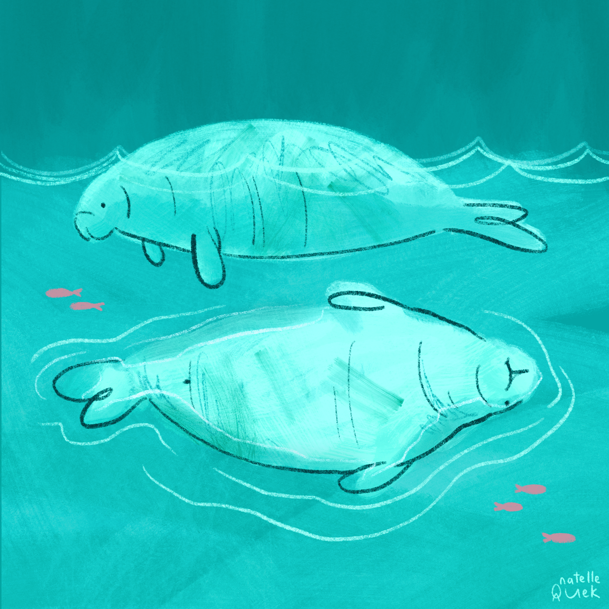 Rich turquoise background qith an even brighter outline of two dugongs, drawn around with crayons strokes. One is facing left, seen from the side; the second is below and facing belly up, their snouts, flippers and tails are little and round. There are five very small pink fish dotted aorund.