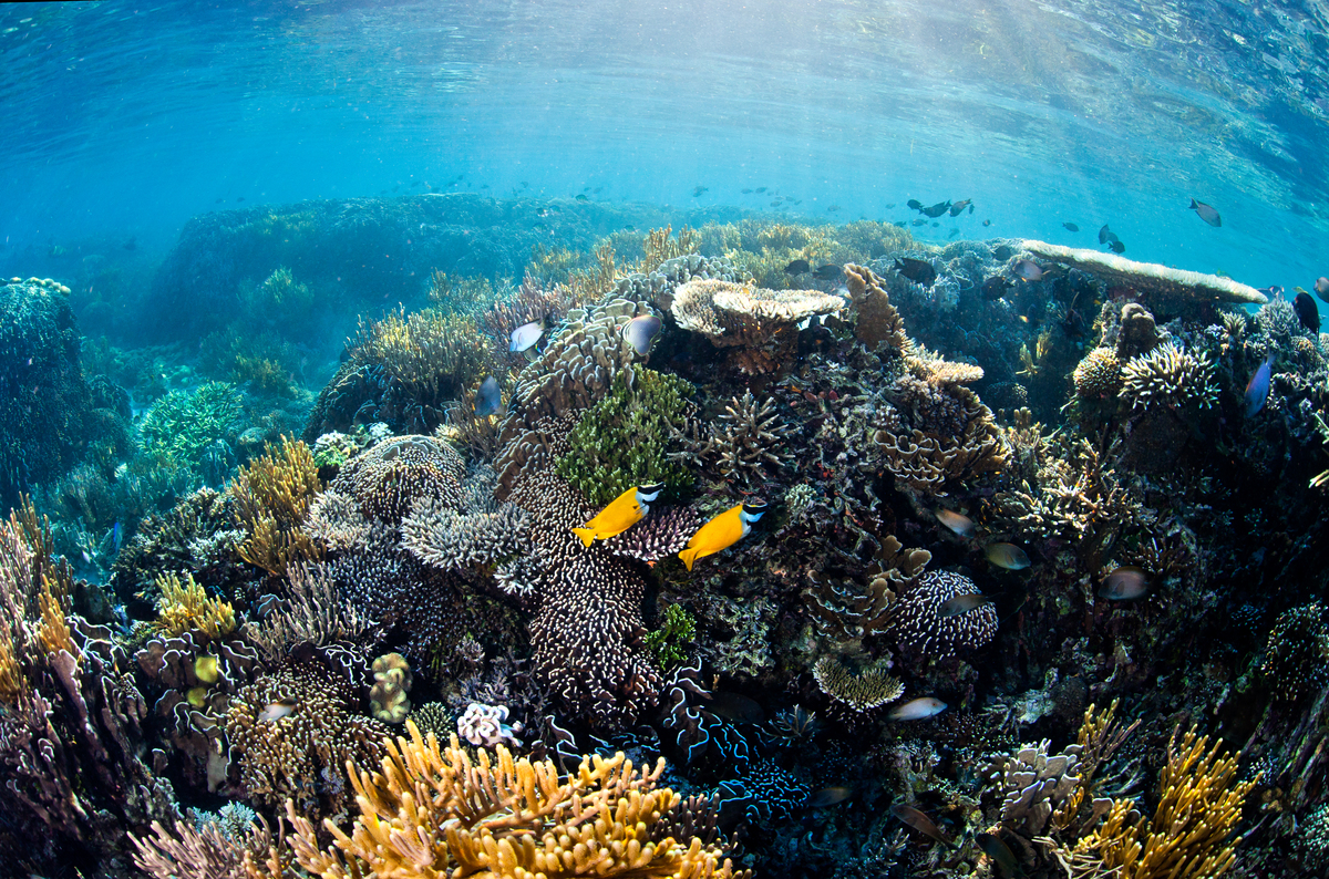 Brightly coloured fish swim among thriving corals in shallow sunlit waters