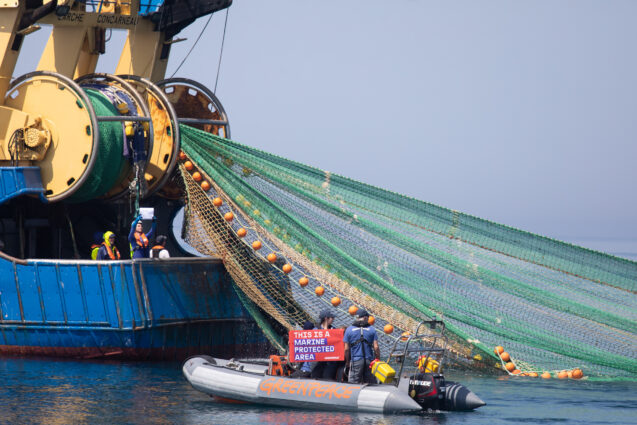 Campaigners in a small inflatable boat pull up behind an industrial fishing ship as it hauls in a huge green net. They hold up a banner reading 'This is a Marine Protected Area'